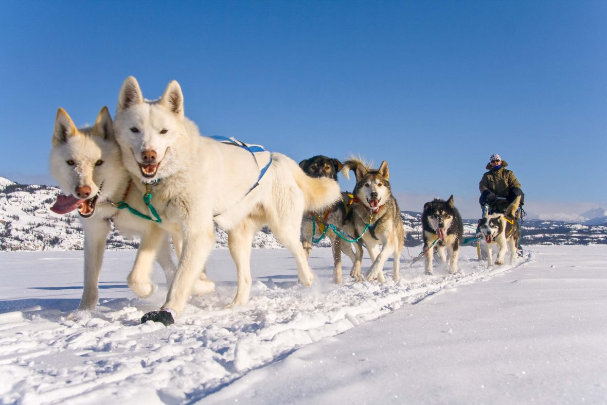 A sled dog team with their musher at Fish Lake, Yukon.