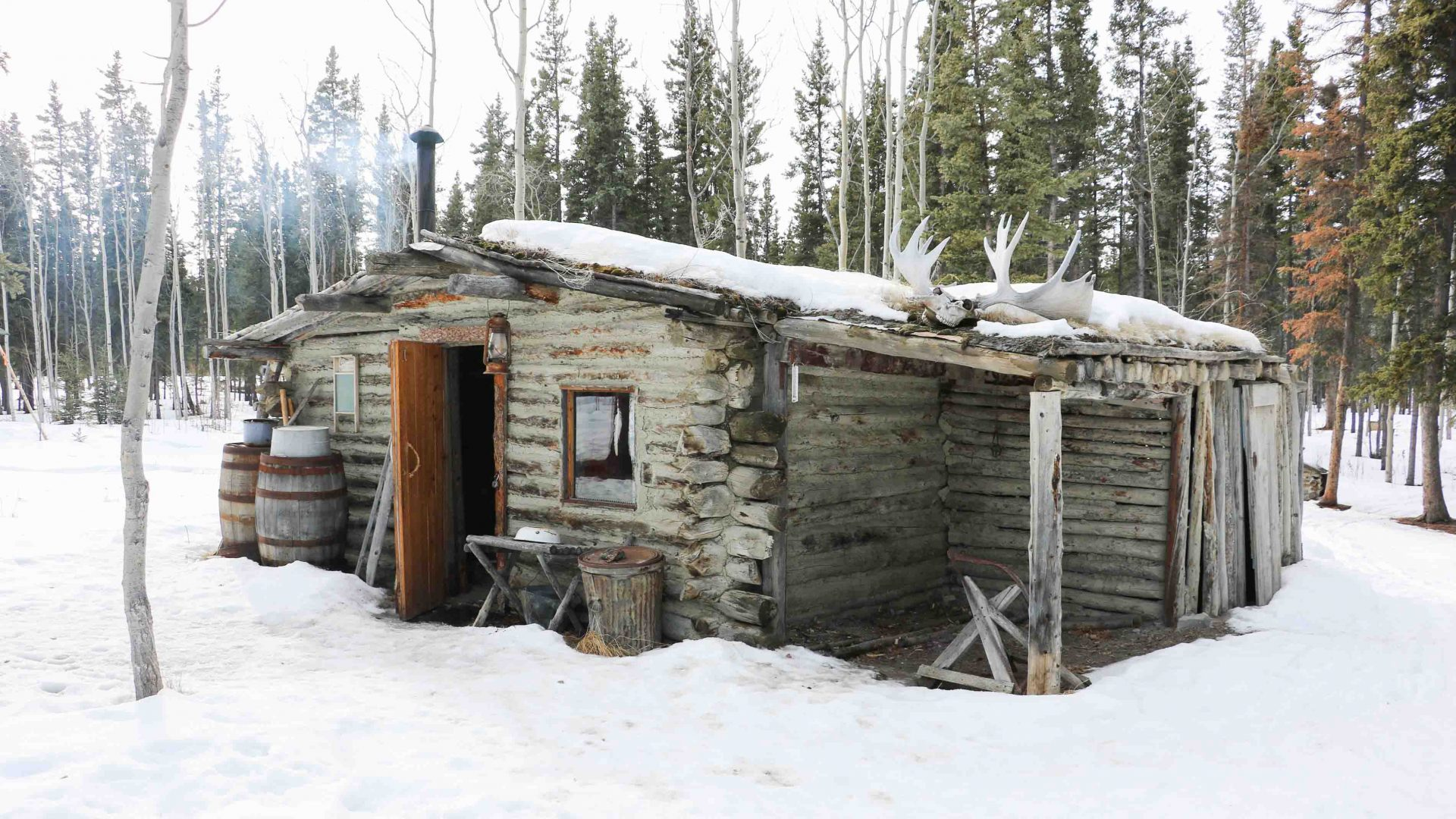 A trapper's cabin with antlers on its roof in the Yukon.