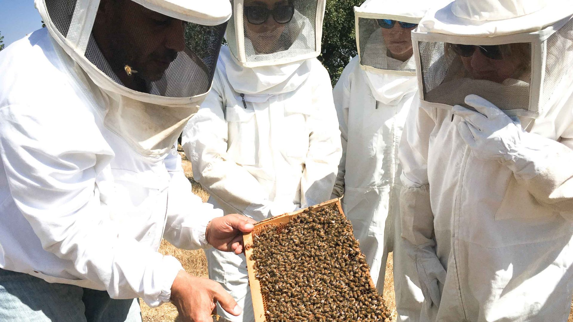A local apiary where former soldier-turned-beekeeper Yousef Sayyah has been tending bees for over 15 years.