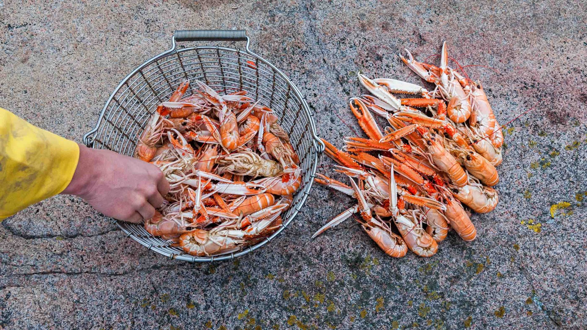 In search of the alternative Big Five: A Swedish seafood safari