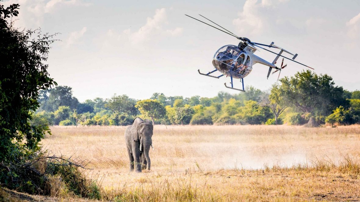 An elephant is tranquilised by an expert vet from a helicopter, part of a translocation of 500 elephants to balance populations.
