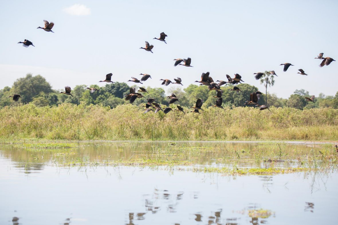 Birds on the Shire River in Liwonde National Park, Malawi.