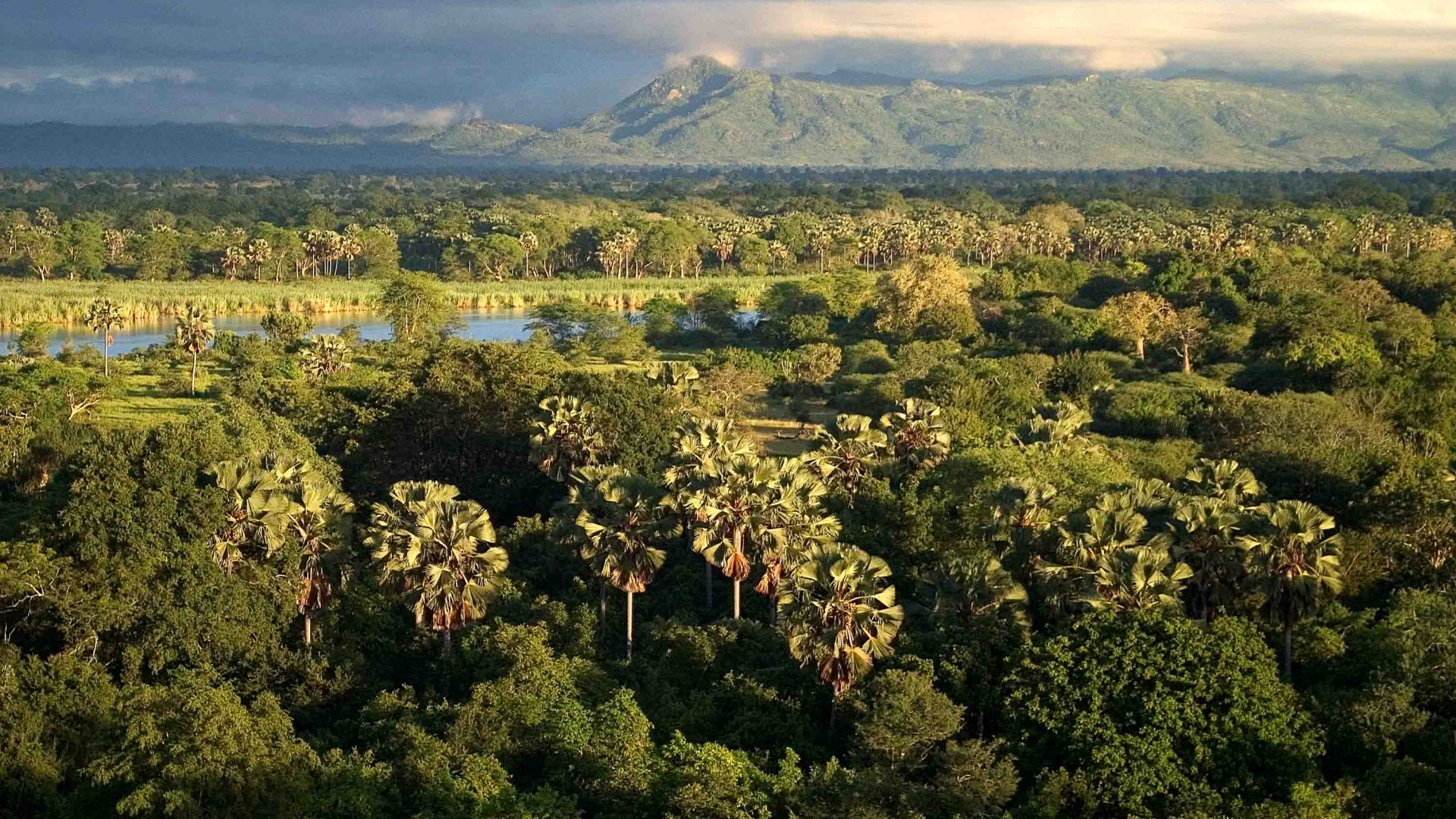 The vast green landscape of Liwonde National Park, Malawi.