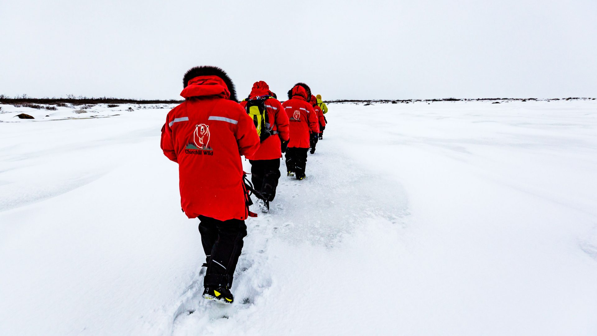 Guests walk single-file across the tundra in Hudson Bay, Manitoba, as it's less threatening to wildlife.