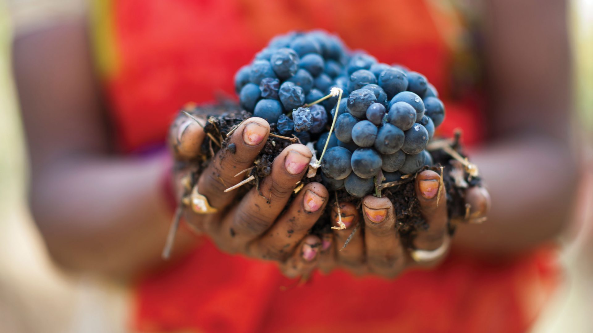 Grape expectations: Inside India's blossoming wine region