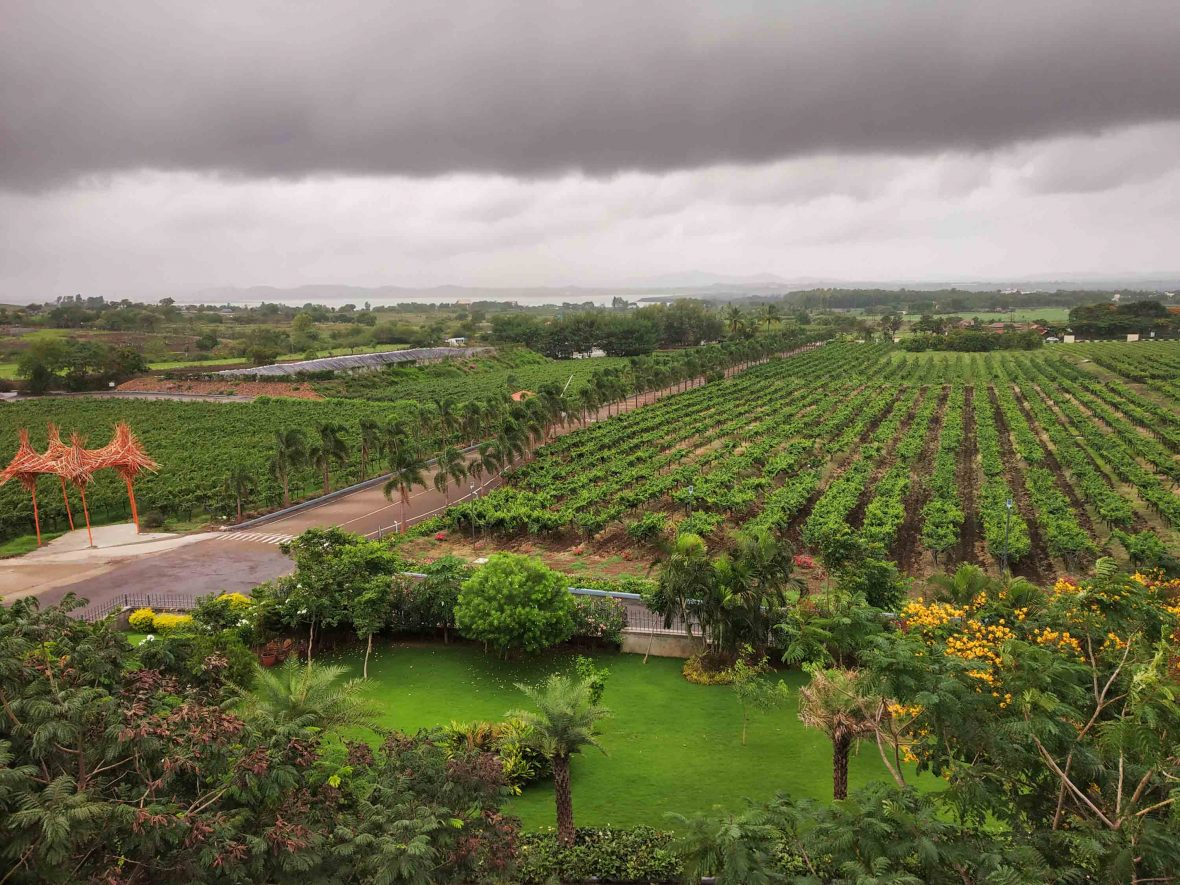 Sula Vineyards in Nashik, India.