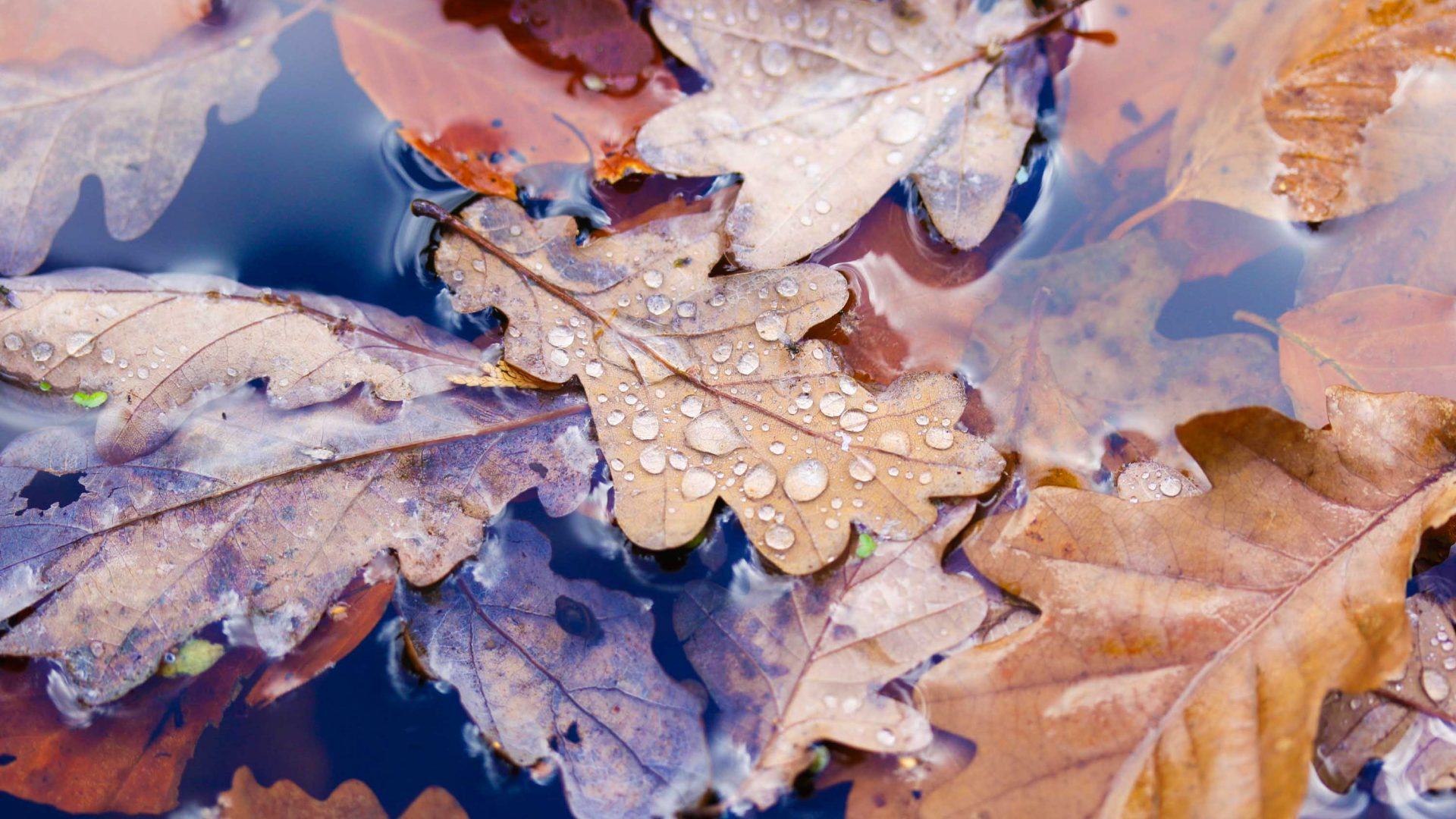 Leaves sprinkled with rain drops form a beautiful pattern.