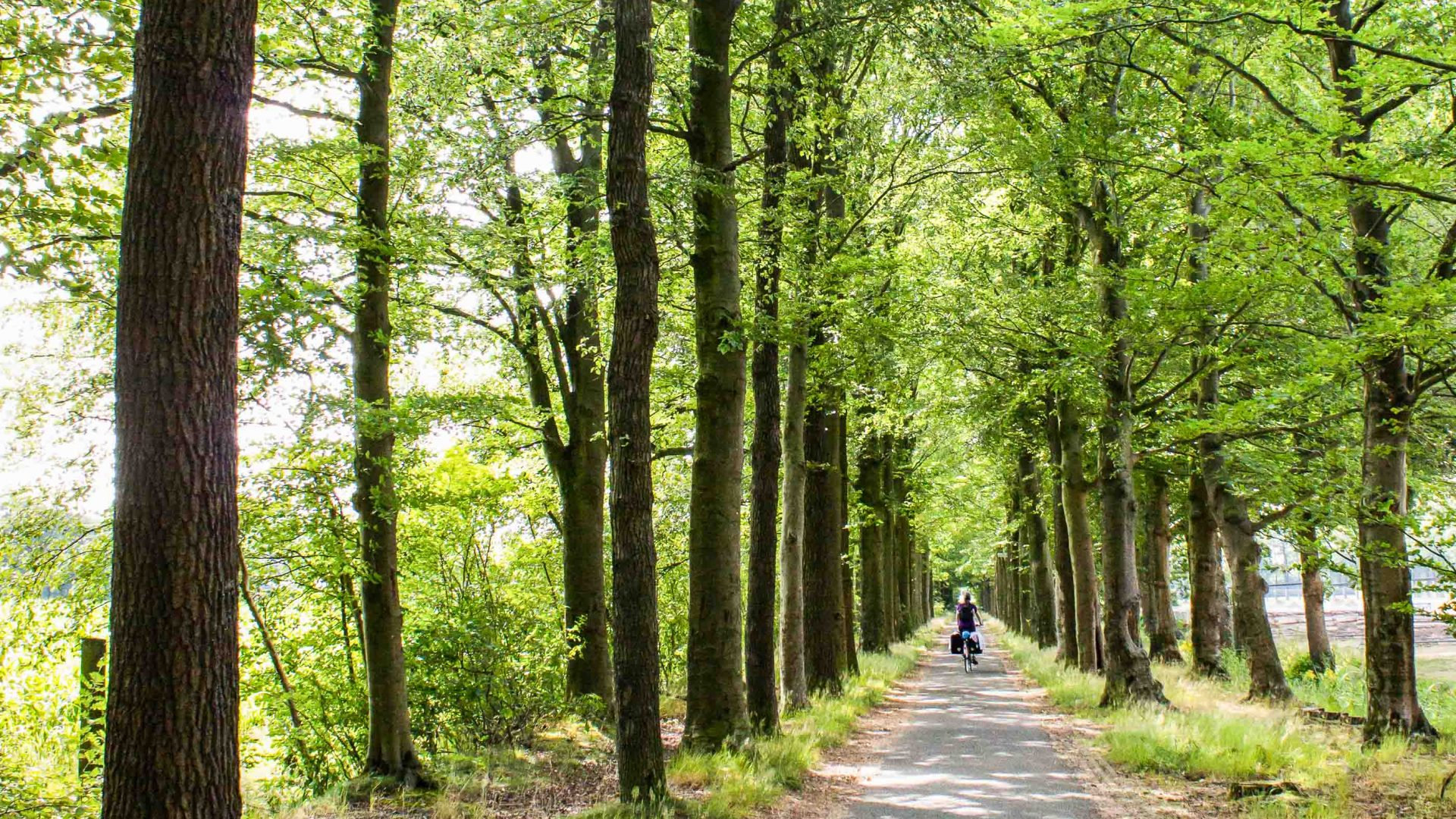 Cathleen cycling through the forest in the Netherlands.