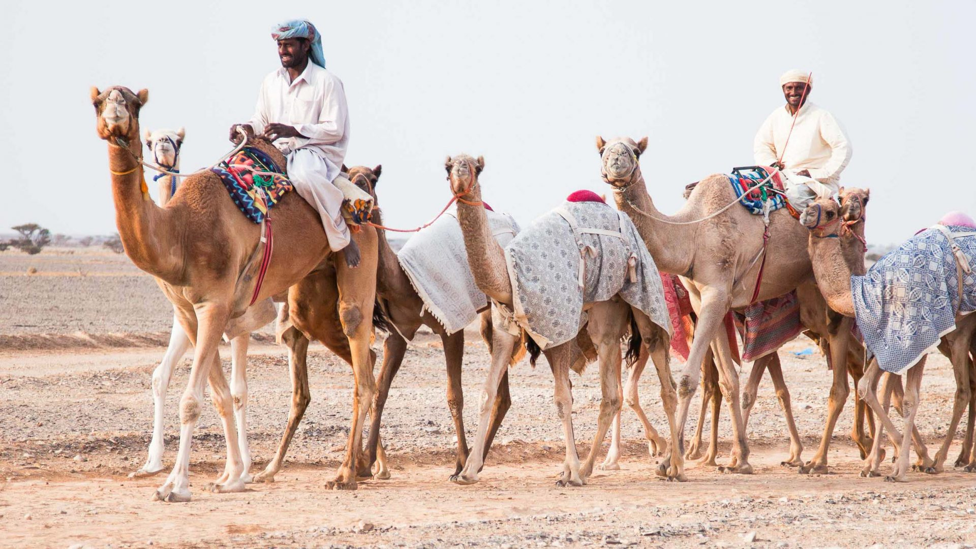 The ultimate travel companion? A beginner's guide to shopping for a camel