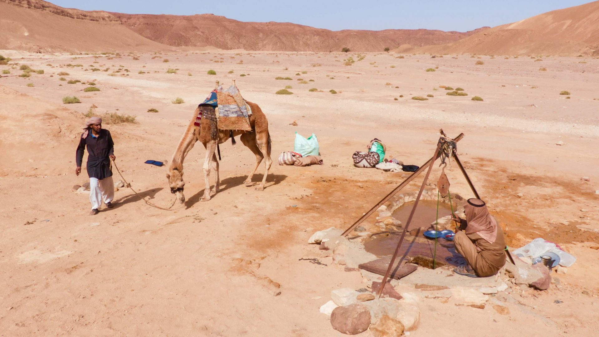 Harboush the camel re-hydrates at a well in the Sinai desert.