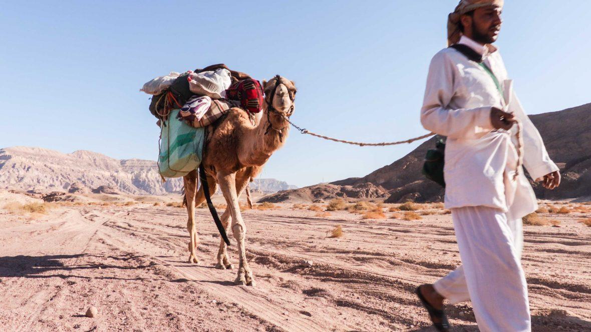 Leon's Bedouin companion Suleiman with Harboush the camel.