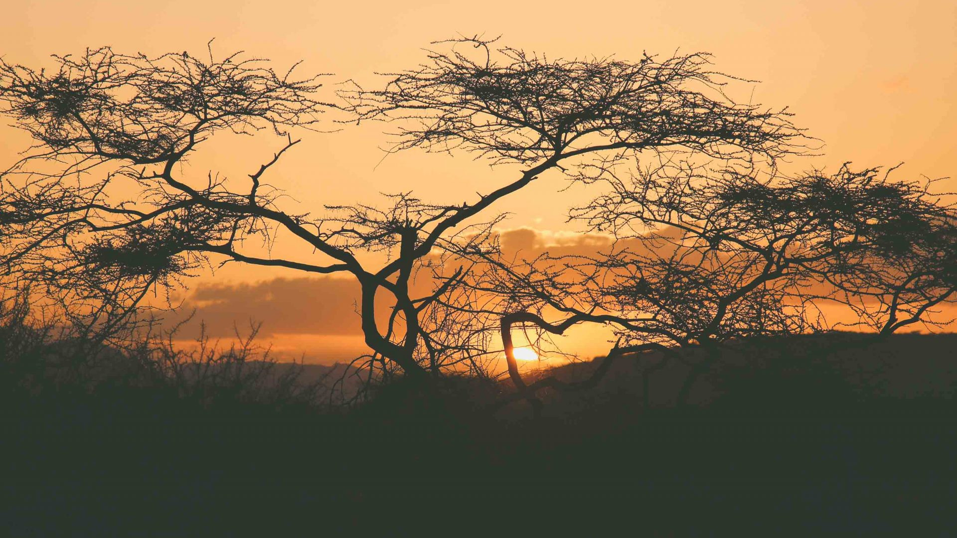 Acacia trees are silhouetted against the warm glow of the setting sun in Samburu territory, Kenya.