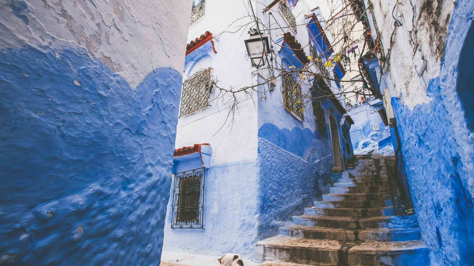 The vibrant blues of Chefchouen, Morocco.