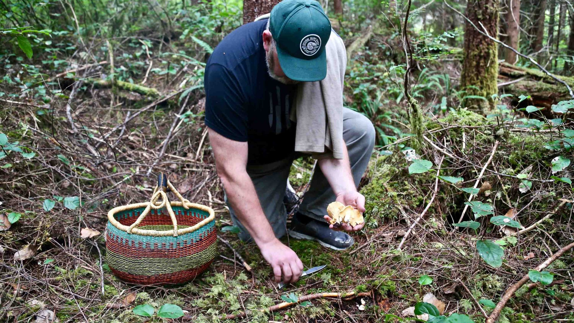 Ian Riddick harvests a handful of golden chantarelles.
