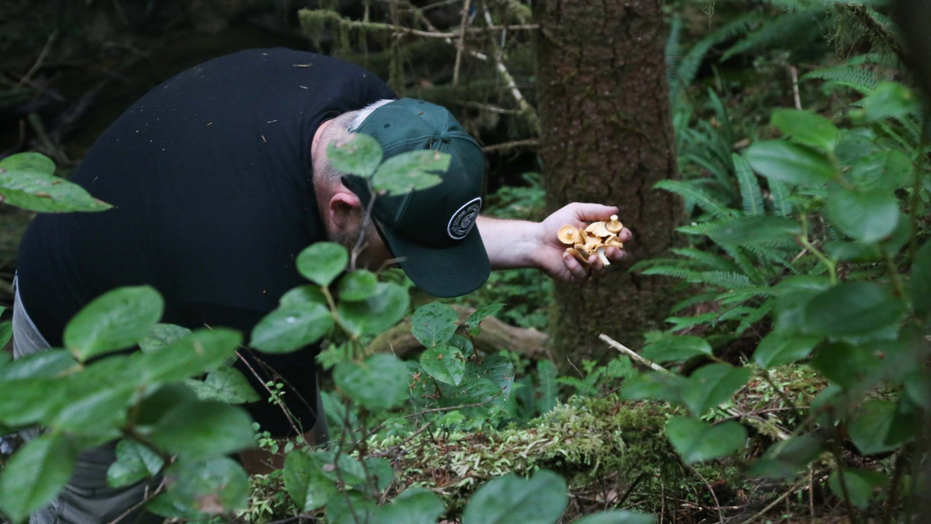 Ian Riddick has his hands full of golden chanterelles.