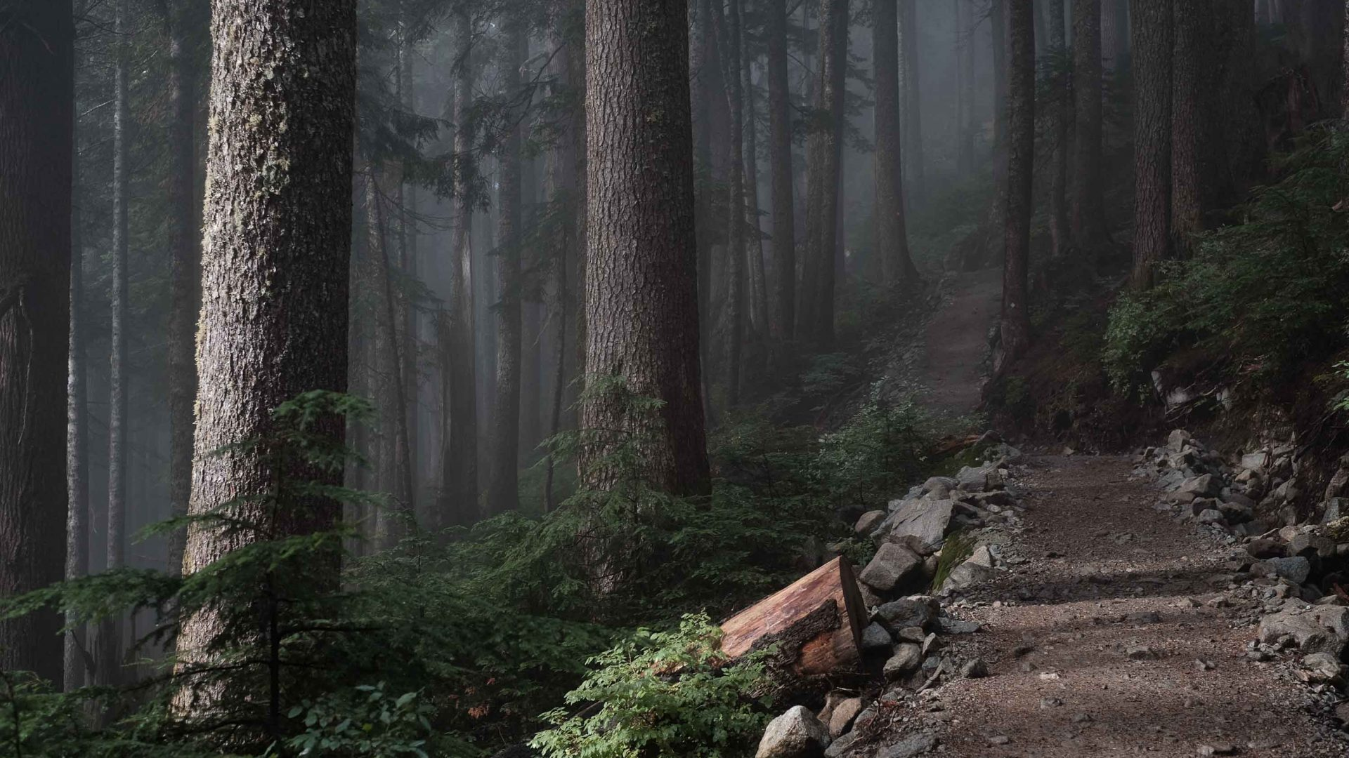 A trail leads through forest on Vancouver Island, Canada.