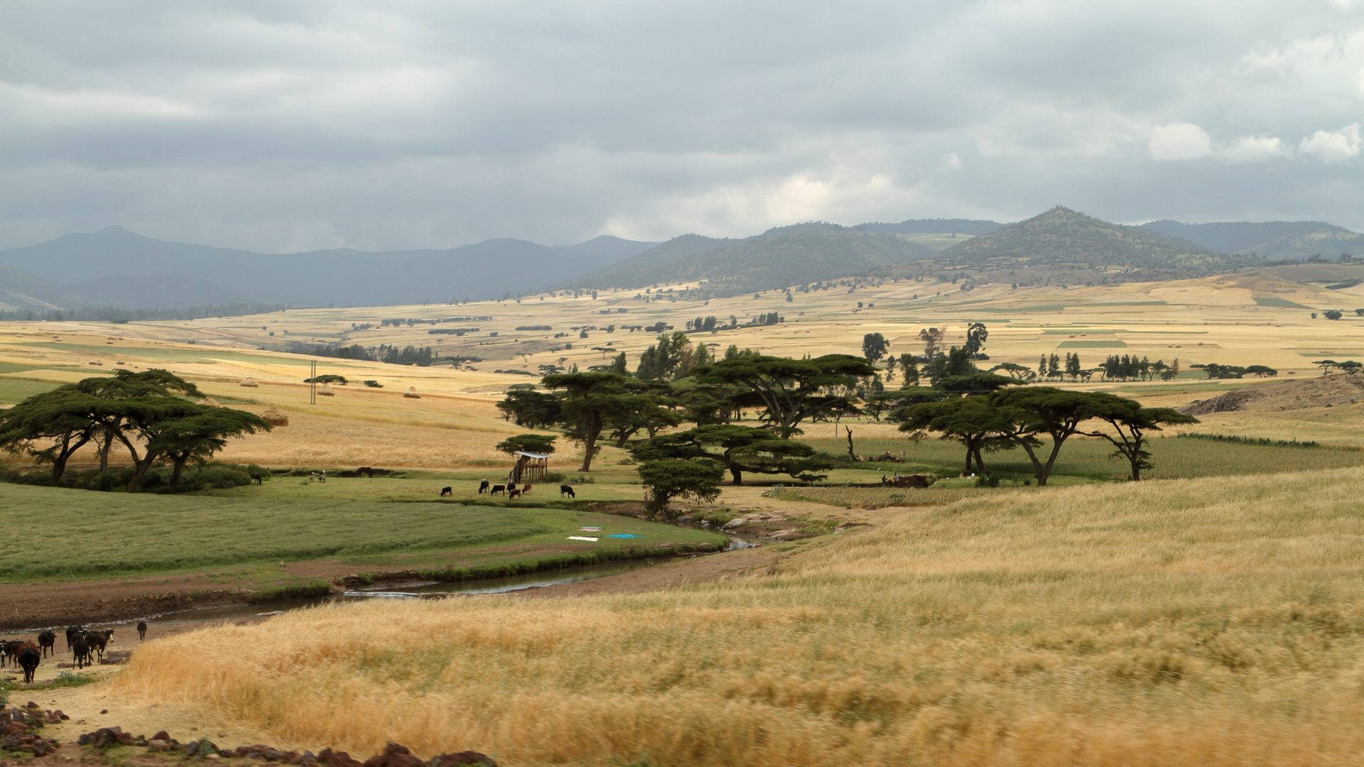 The landscapes of the Bale Mountains in Ethiopia.