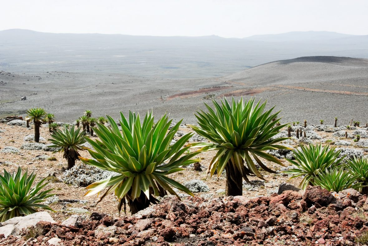 Bale Mountains National Park, Ethiopia