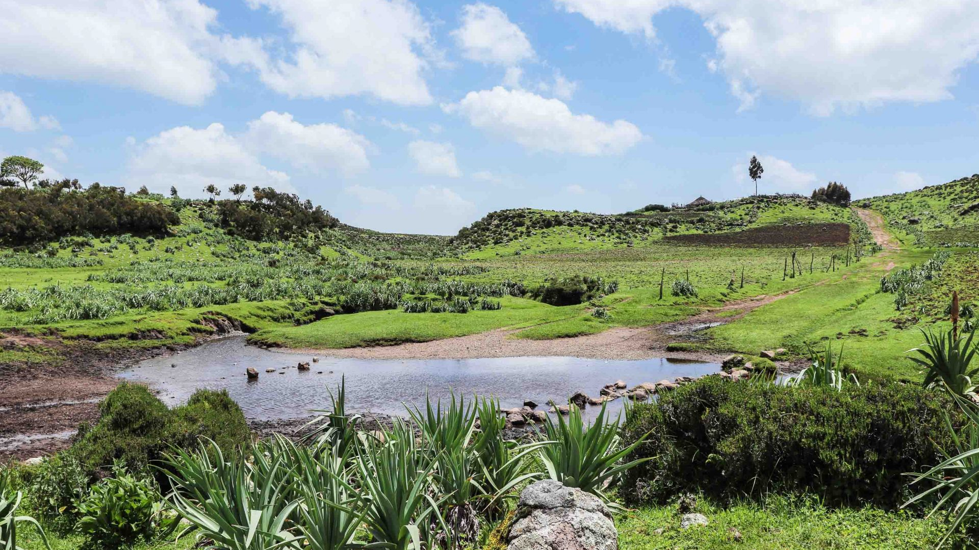 The spectacular Bale Mountains in Ethiopia.