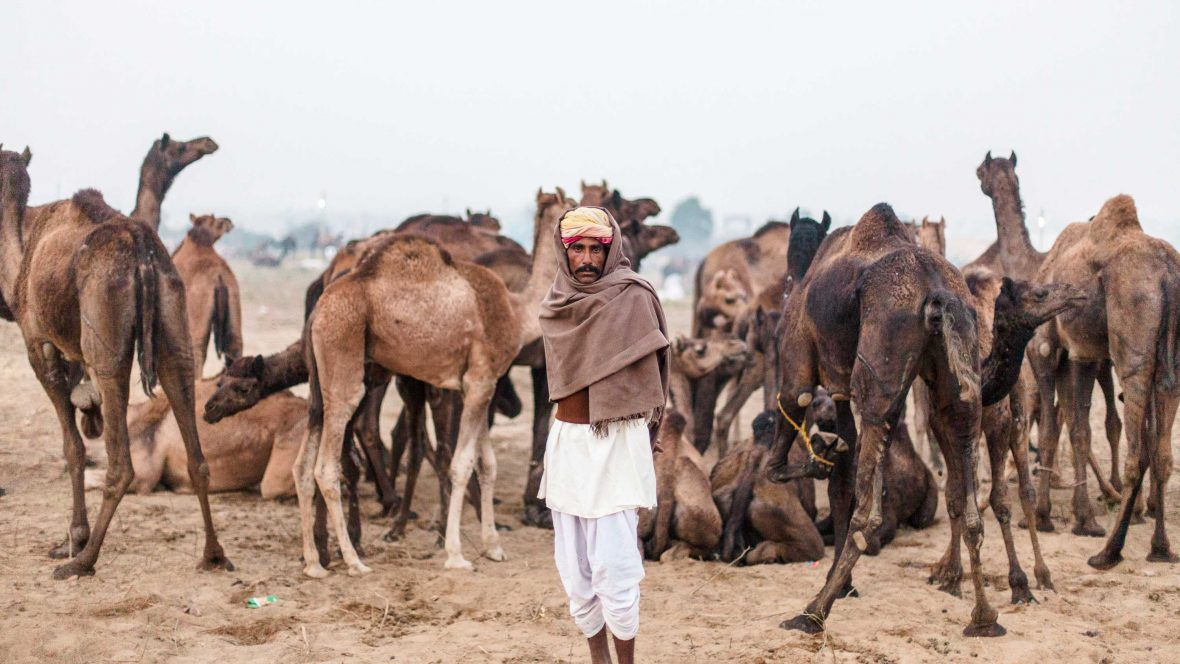 In photos: The mesmerizing and surreal Pushkar Camel Fair