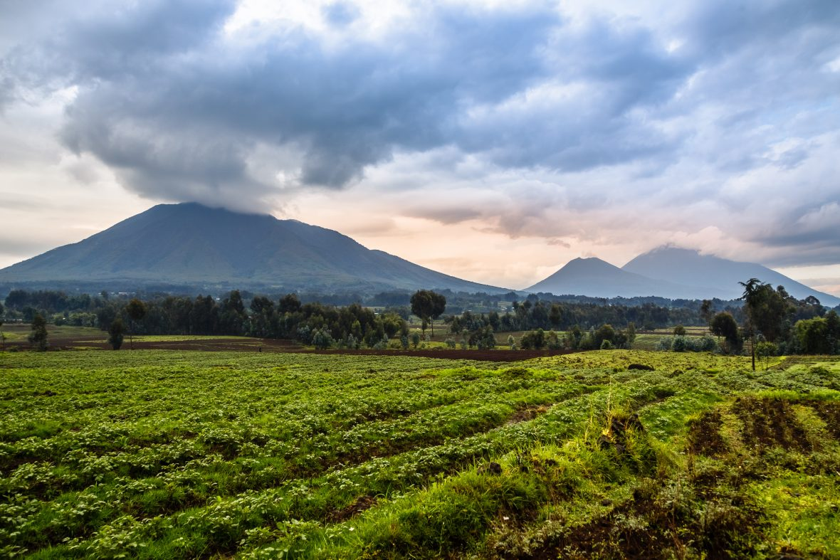 Volcanoes National Park in Rwanda.