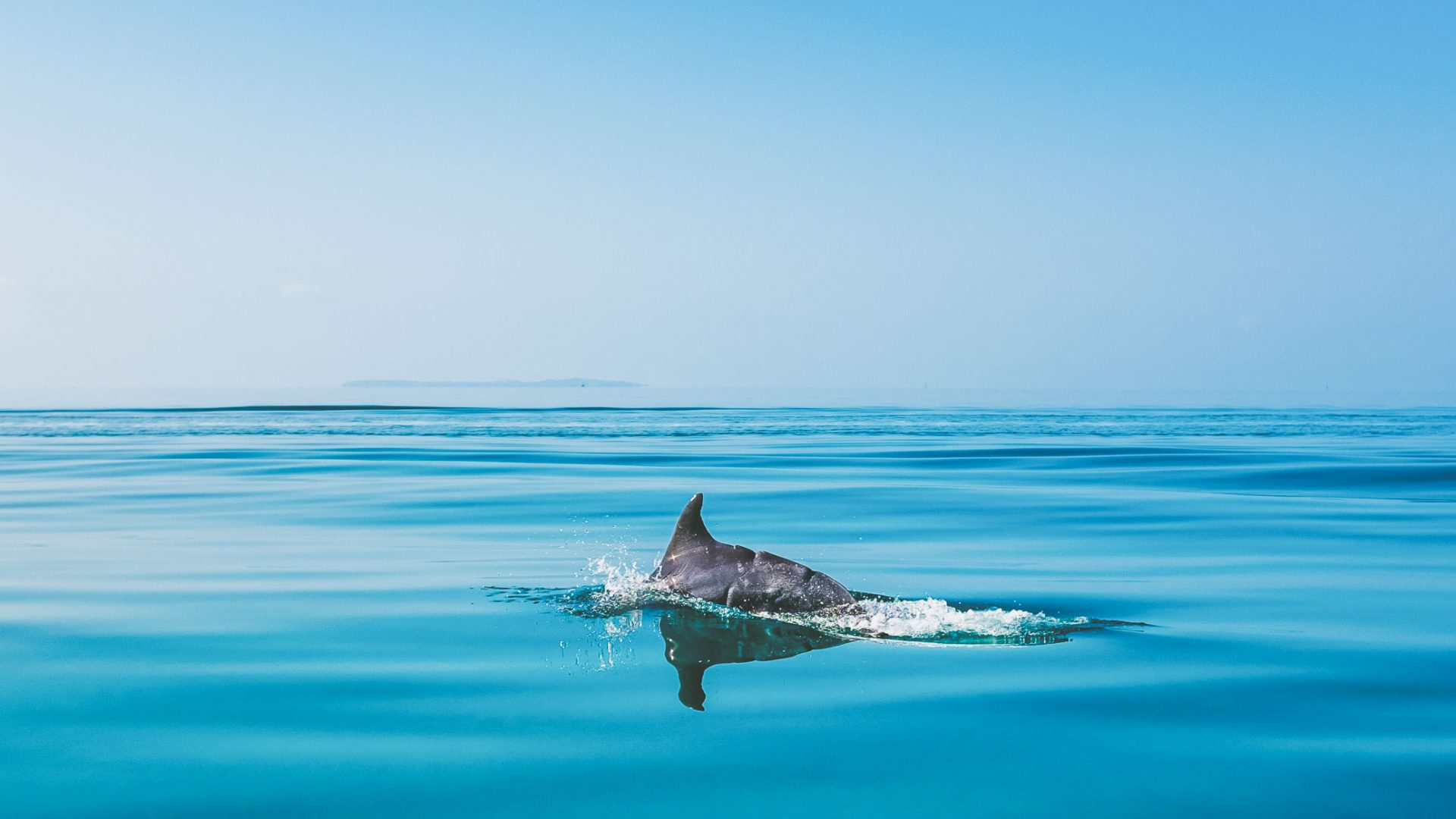 A dolphin on its way to Bazaruto Island in Mozambique.