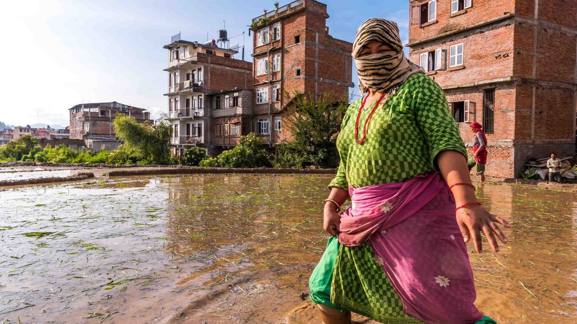 Women work in the flooded rice fields of Panauti, Nepal.