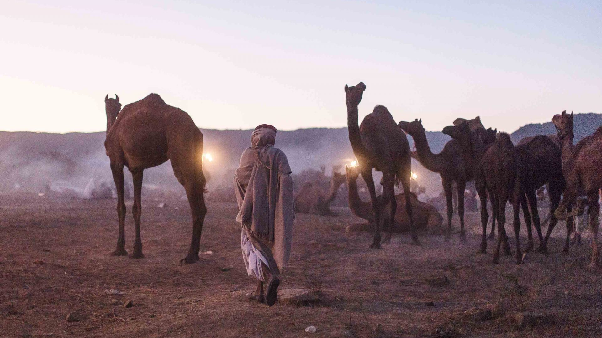 A camel herder at dawn on the dunes of Pushkar.