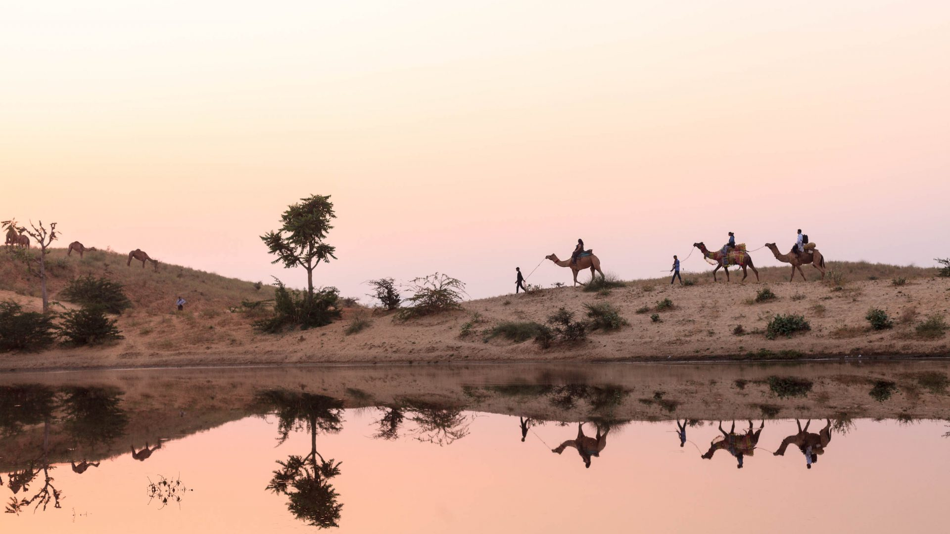 Camels reflected in a small desert oasis on the dunes of Pushkar.