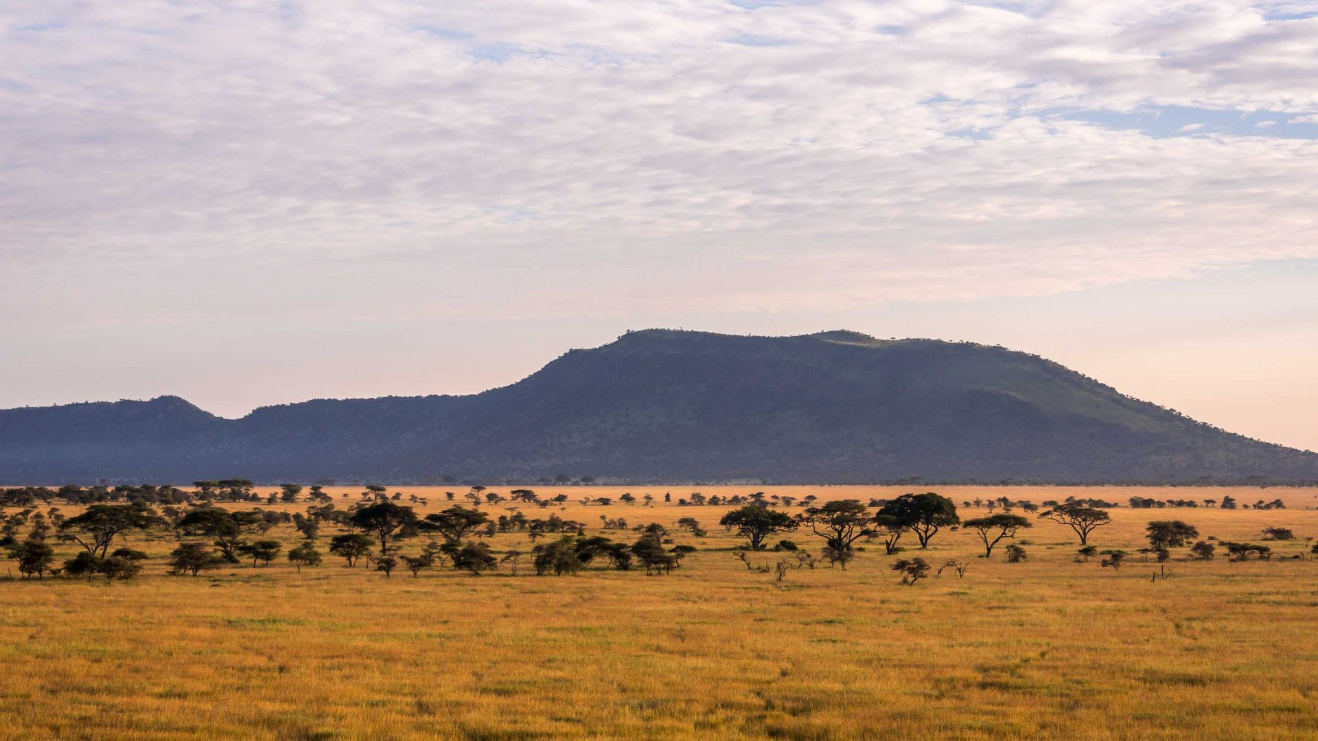 The vast plains of the Serengeti, Tanzania, at dawn.
