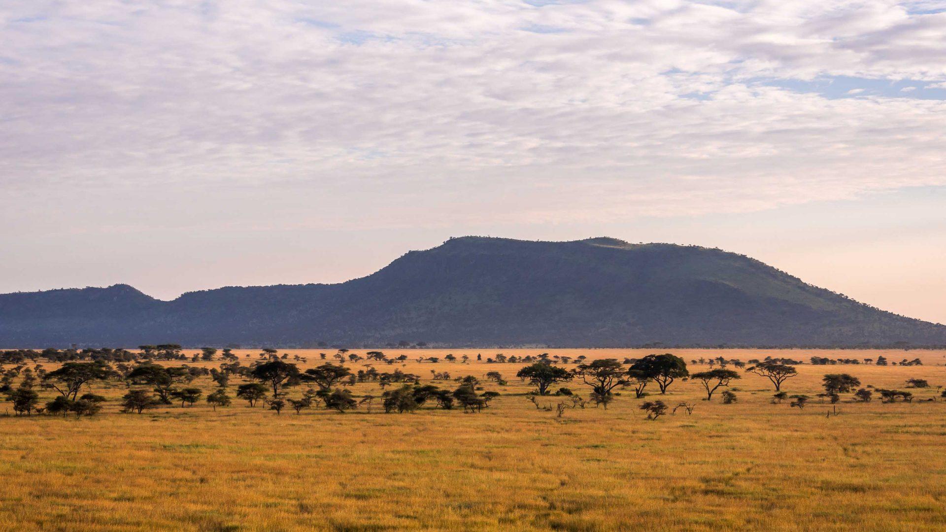 The vast plains of the Serengeti, Tanzania, at dawn.