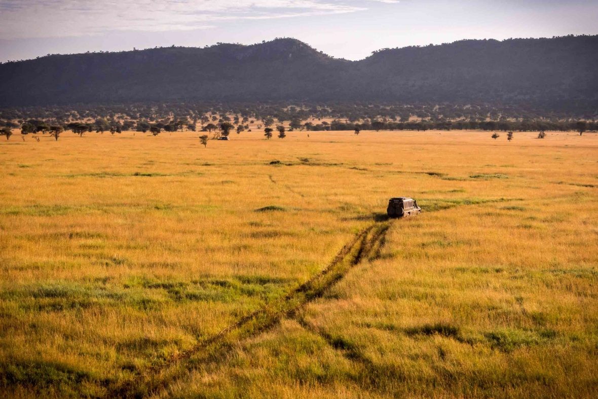 A jeep crosses the plains of the Serengeti in Tanzania to transport tourists to the take off point of their hot air balloon.