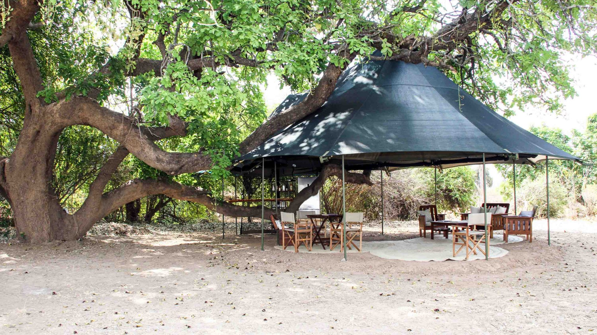The 'sitenje' tent at Mapazi under a large sausage tree with a large bough supporting the bar.