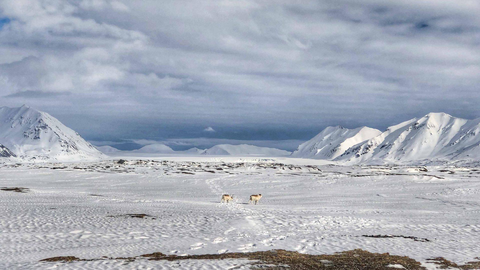 Expansive views of reindeer, glaciers and open skies.