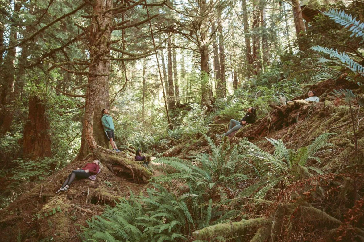 A group practises the Japanese tradition of forest bathing in an Oregon forest.
