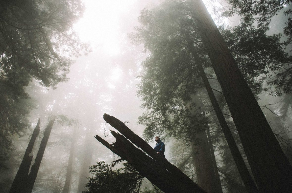 The ancient Japanese tradition of forest bathing is renowned for offering both mental and physical benefits.