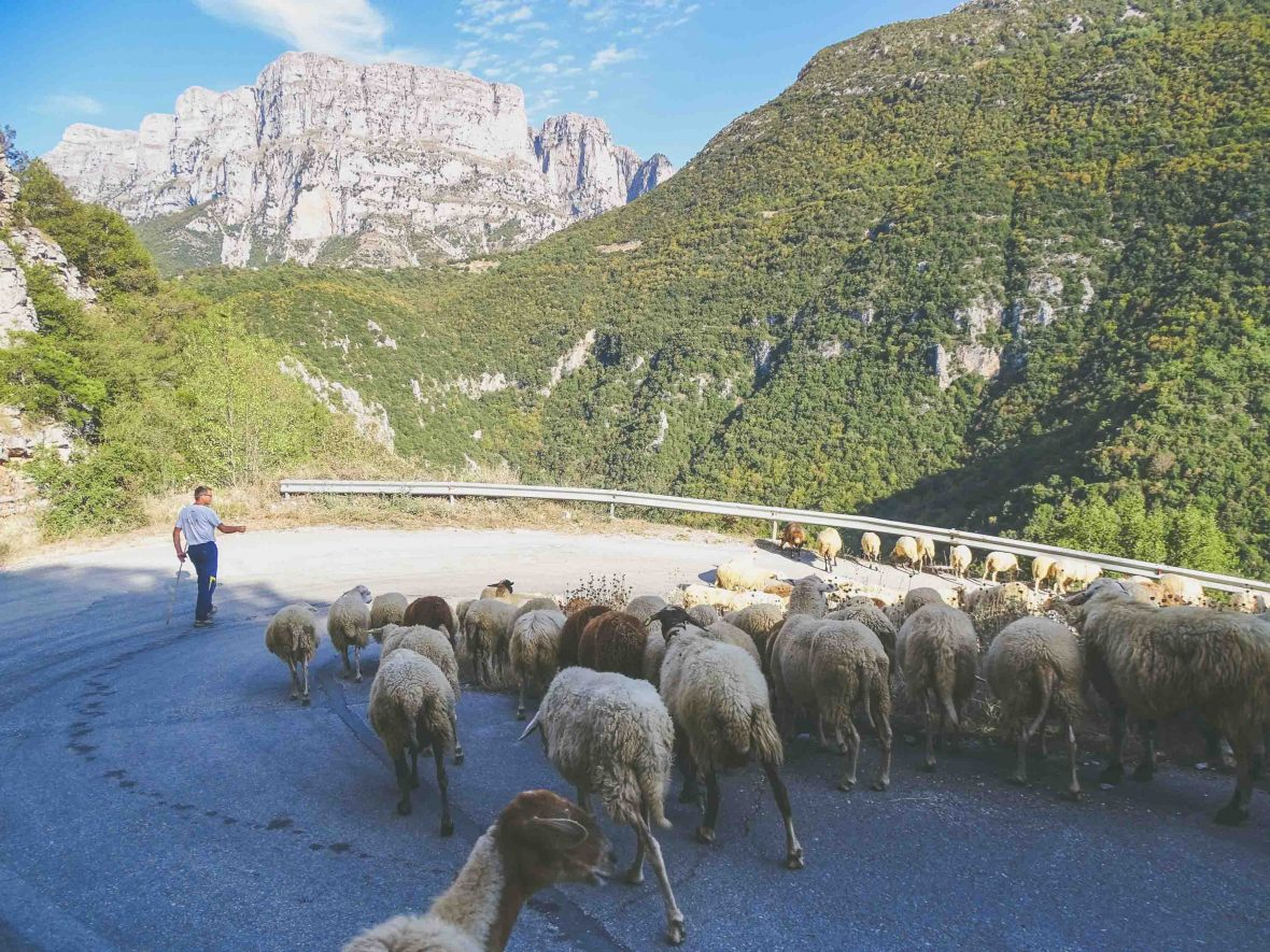 A shepherd heads home below Papigo village in the Zagori region, Greece.