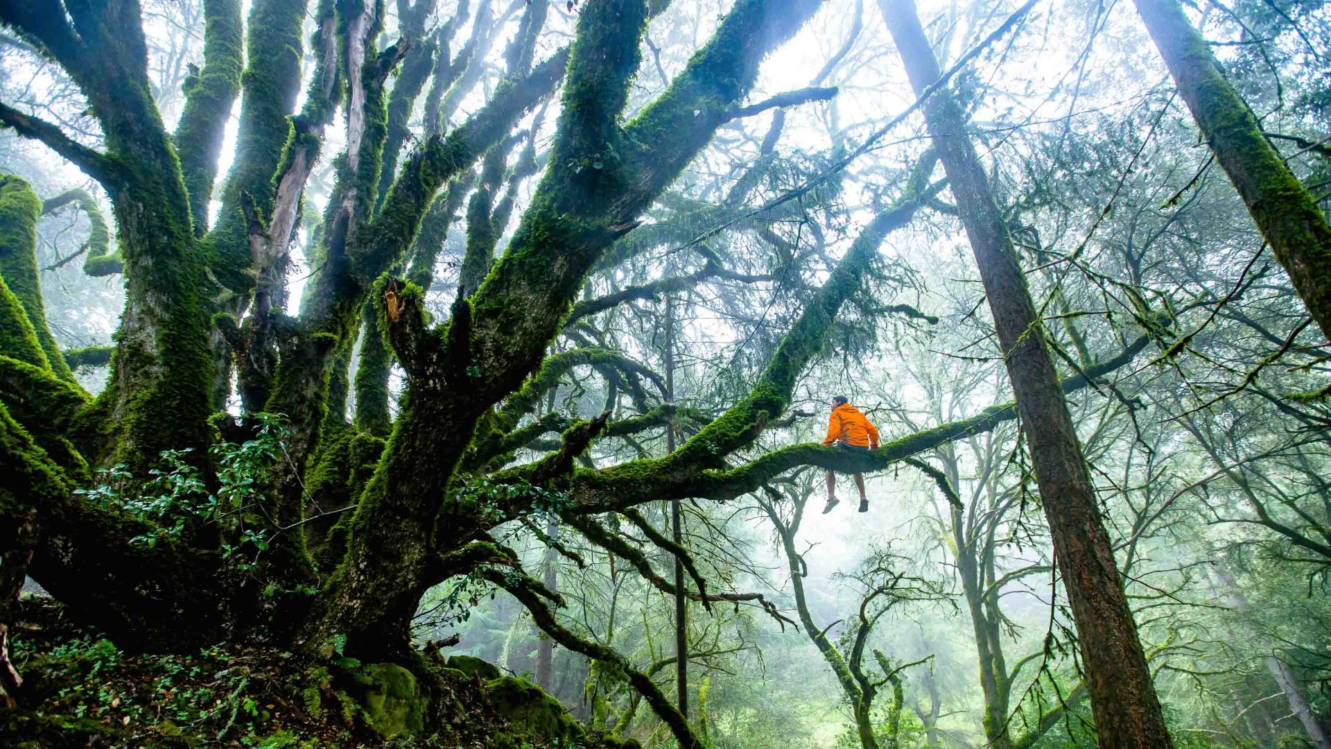 What on earth is forest bathing? (And where on earth did it come from?)