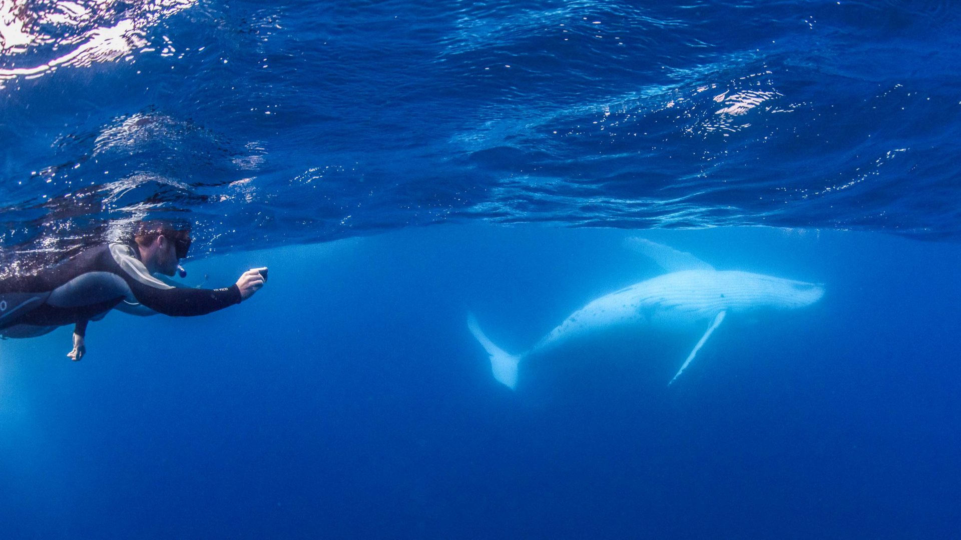 How can swimming with humpback whales help protect the ocean?