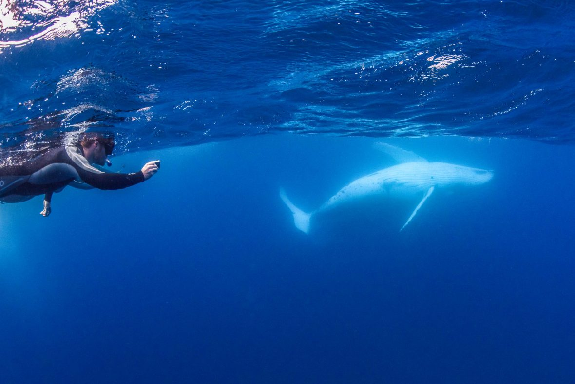 A swimming photographs a whale.