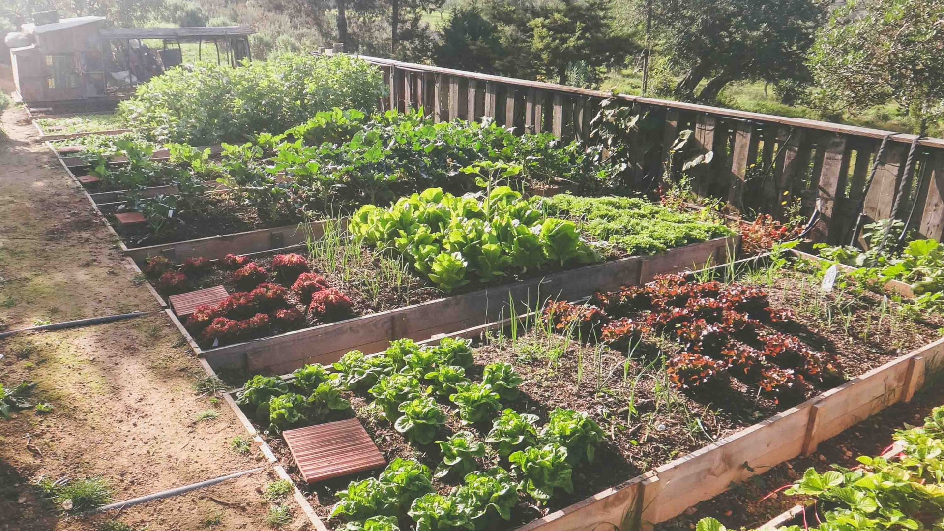 The 14 vegetable gardens at Casita Verde use recycled water.