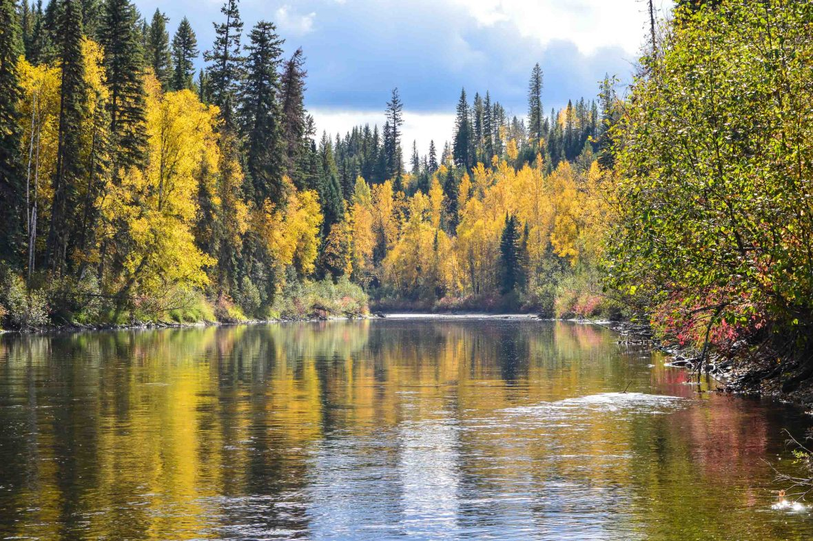 The river, spectacular in its own right, is the perfect spot to watch for grizzly bears.