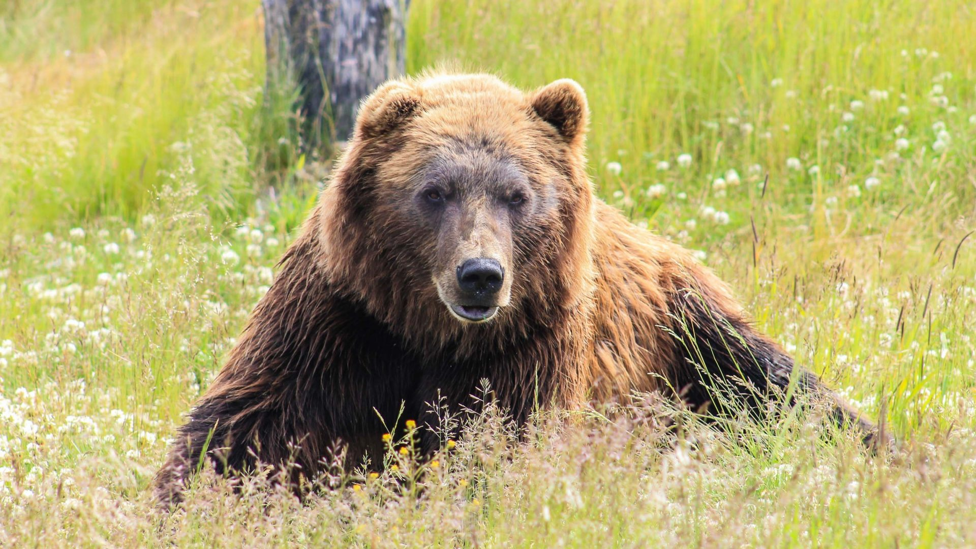 In search of grizzlies with Canada's bear whisperer