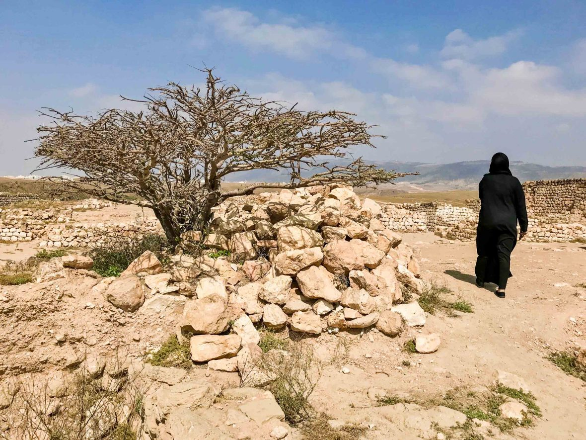 Emma's guide Raya passes by a frankincense tree. There are concerns frankincense production will decline as old trees aren't being replaced.