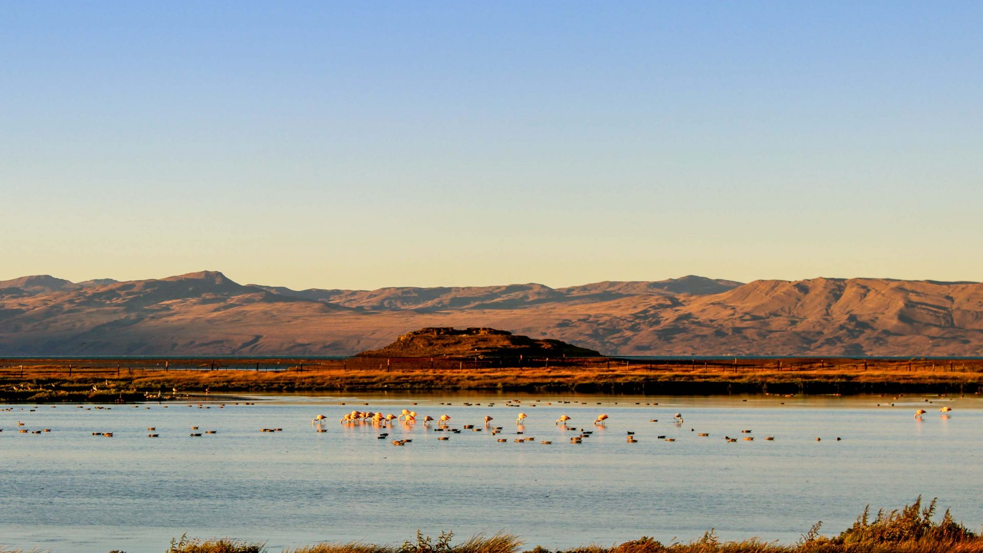 Flamingos near El Calafate, a town by the edge of the Southern Patagonian Ice Field.