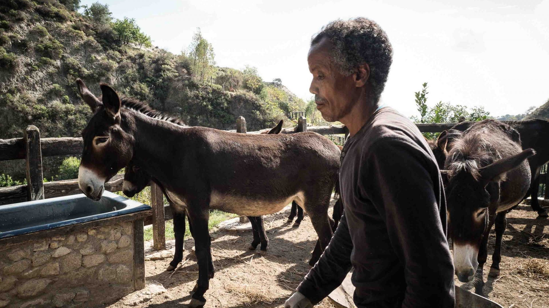 Kassai from Eritrea feeds donkeys on the didactic farm in Riace.