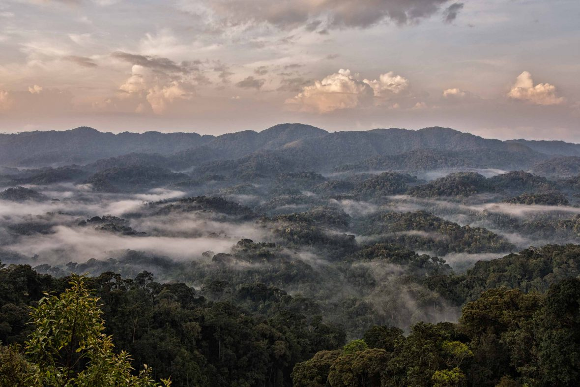 Dawn over Rwanda's Nyungwe Forest, the largest mountain rainforest in Africa.