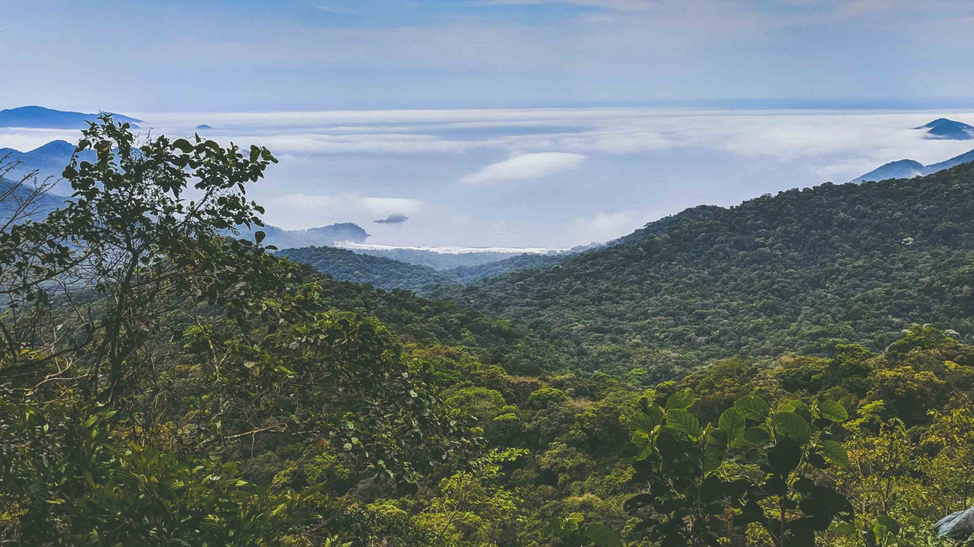 Atlantic forest covers some 85 percent of Ilhabela in Brazil.