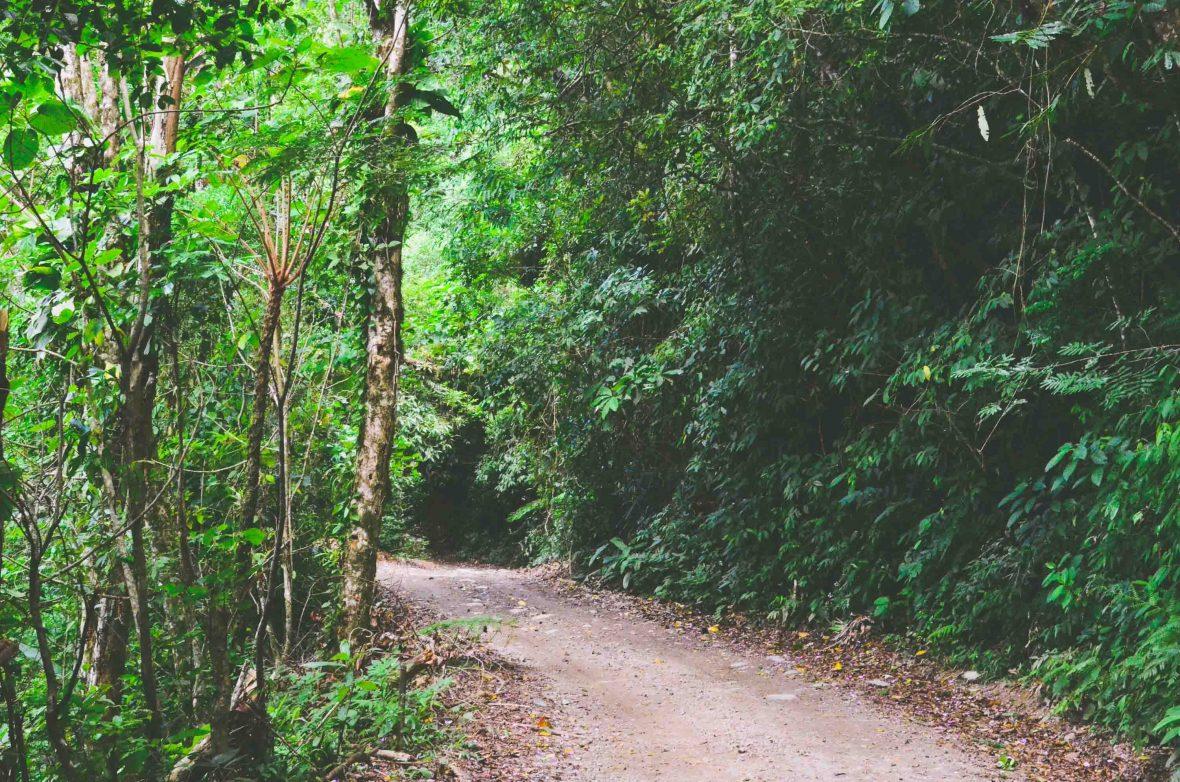Rough roads make travel through Ilhabela's Atlantic Rainforest very slow.