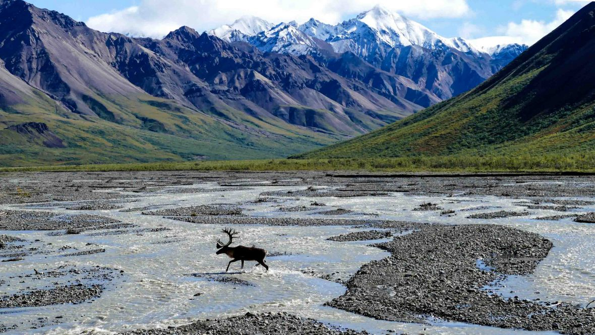 Wildlife and stunning vistas greet visitors to Denali National Park, Alaska.